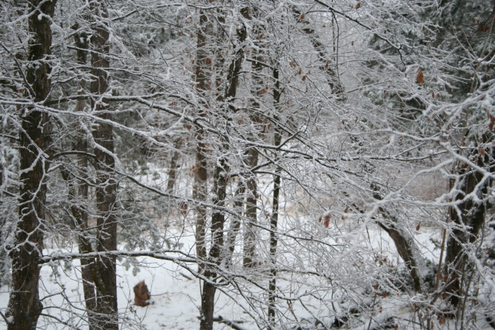 Forest covered in snow crystals