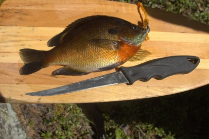 Blue Gill BWCA 2014 email