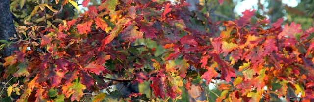 Oaks turning color e mail