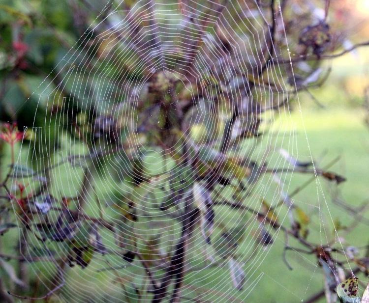 Spider web art email