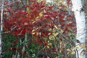 Sumac colors email