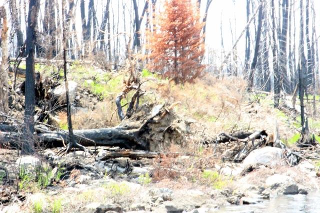 BWCA Fire email