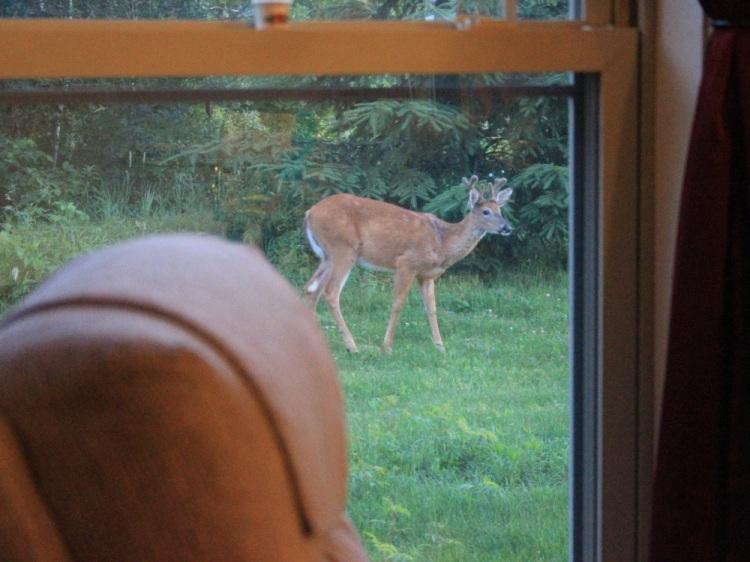 Deer email