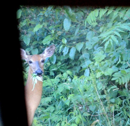 deer 2 looking through window eml