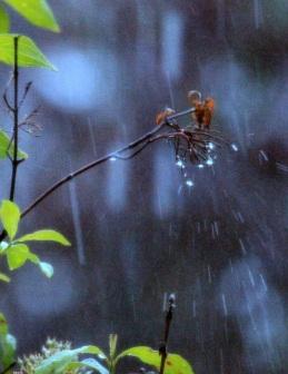 Raining eml