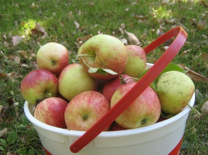 apples eml