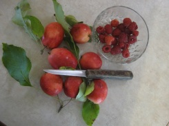 Crab apple eml