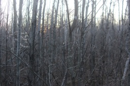 View from a deer stand 2