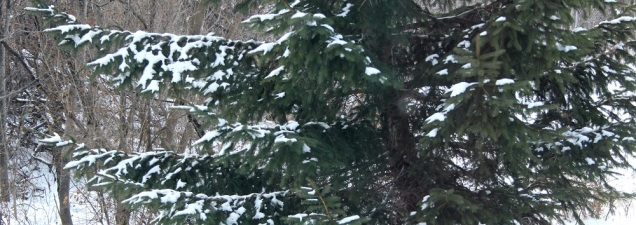 winter cp eml