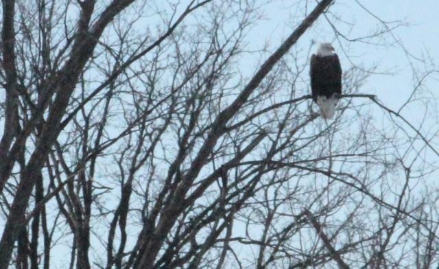 eagle cp eml.jpg