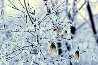 Frost bush cpo eml