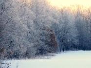 Frosty Feb ed eml