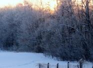 Frosty Field ed eml