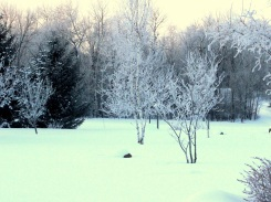 Frosty yard ed eml