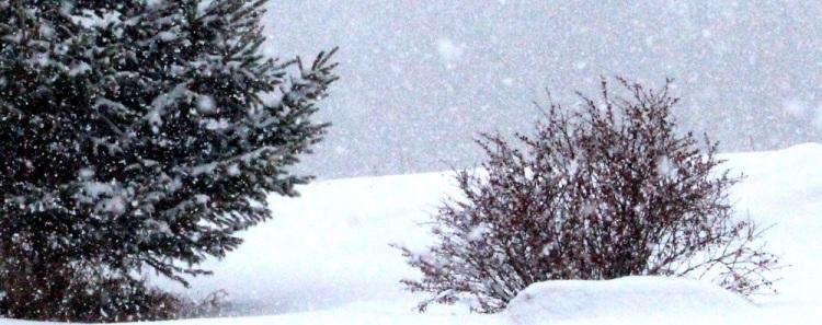 snow days 2 ed eml