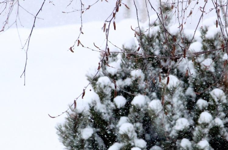Snowing cp eml