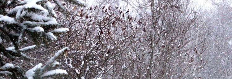snowy yard ed eml