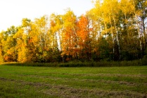 fall field color2 eml