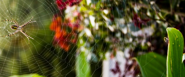 spider web 2eml