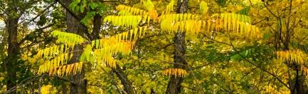 yellow sumac banners eml