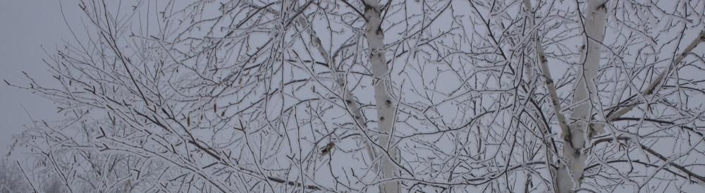 Frosty birch eml