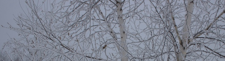 Frosty birch eml