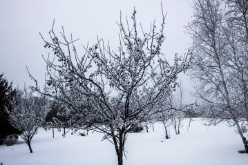 Frosty trees eml