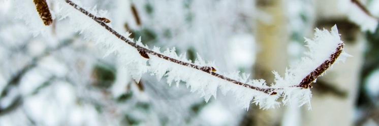 Frosty twig eml