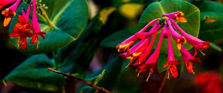 Sunlit blooms eml